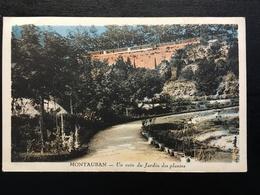 82 - MONTAUBAN - Un Coin Du Jardin Des Plantes -  8202 F - Montauban