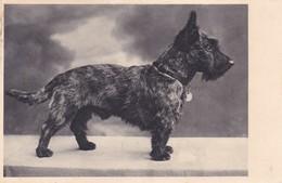 Scottish Terrier  Enfant  Chien  Hunde Cane Old Foto Dog Cpa. - Chiens