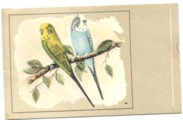 Perruche Ondulées Vertes Et Jaunes - Oiseaux