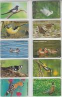 KOREA BIRDS HERON DUCK WOODPECKER PHEASANT HOOPOE 10 PHONE CARDS - Sonstige