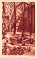 Exposition Coloniale Internationale - Paris 1931 - Le Palais Des Beaux-arts - Le Patio - Éd. Braun & Cie - Esposizioni