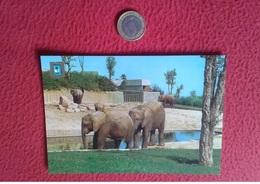 SPAIN TARJETA POSTAL POST CARD VER FOTO MADRID FISA ESCUDO DE ORO ZOO CASA CAMPO ELEFANTE AFRICANO AFRICAN ELEPHANT VER - Elefantes
