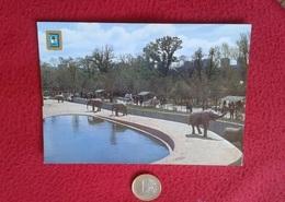 SPAIN TARJETA POSTAL POST CARD MADRID VER FOTO/S PARQUE ZOOLOGICO ESCUDO DE ORO FISA ELEFANTES ELEFANTE ELEPHANT ELEFANT - Elefantes