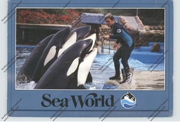 SEA WORLD, Killer Whales - Animali