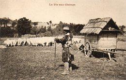 LA VIE AUX CHAMPS  Berger Moutons Charrette  éditeur Bergeret état Voir Scan - Landwirtschaft
