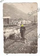 VILLANOVA SUL CLISI - GAVARDO BOSTONE - Rotaie Tram Tramvia - Pastore - Fotografia Originale - Brescia - Luoghi