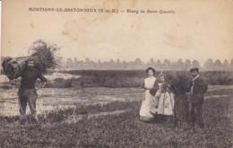 YVELINES  MONTIGNY LE BRETONNEUX - Montigny Le Bretonneux