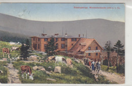 Riesengebirge - Wosseckerbaude - 1910 Kühe, Wandergruppe .. - Schlesien