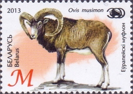 Belarus - European Mouflon (Ovis Orientalis Musimon), MINT, 2013 - Selvaggina