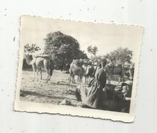 Photographie, Issue D'un Album,mon Service Militaire En Tunisie, SEDJOUNI ,troupeau De Chameaux ,1947 - Luoghi