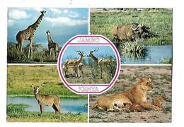 AFRIQUE----KENYA---JAMBO--multi-vues--voir 2 Scans - Kenya