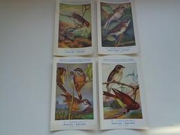 Beau Lot De 10 Cartes Postales Oiseaux  Oiseau  Illustrateur H.Dupond     Mooi Lot Van 10 Postkaarten Van Vogels  Vogel - Cartes Postales