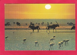 Modern Post Card Of Flamingoes,Oryx,Wildebeest,South Africa. D48. - South Africa
