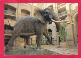 Modern Post Card Of Elephant,Camp Shawu, Kruger National Park, South Africa. D48. - South Africa