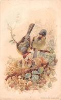 ¤¤  -  Oiseaux  -  Oisillons Dans Un Nid  -   Illustrateur   -   ¤¤ - Birds