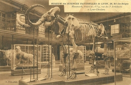 Museum Des Sciences Naturelles De LYON 28, Rue Des Belges   - Mammouth, Trouvé En 1859 - Lyon