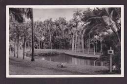 CPSM Ile Maurice Mauritius Afrique Noire Non Circulé - Mauritius