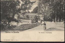 TERVUREN TERVUEREN Un Chemin. Obl. 1902 - Tervuren