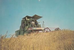Syria Wheat Harvesting Old Postcard Harvest Combine - Siria