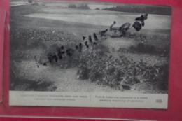 C P Infanterie Francaise Dissimulee Dans Une Vallee Attendant Son Entree En Action - Manoeuvres