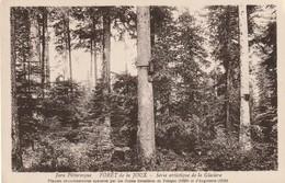Forêt De La Joux : Série Artistique De La Glacière. - Autres Communes