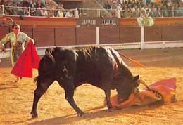 Spain España  Corrida De Toros  Cogida   Stierengevecht   Barry 4094 - Stieren