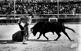Spain España  Corrida De Toros  Photo Foto Orteguina     Stierengevecht   Barry 4098 - Stieren