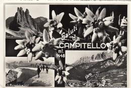 CAMPITELLO-TRENTO-SALUTI DA(MULTIVEDUTE CON STELLE ALPINE)-CARTOLINA VERA FOTOGRAFIA-VIAGGIATA IL 25-8-1958 - Trento