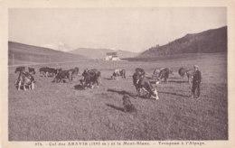 Col Des Aravis (73) - Troupeau à L'Alpage - Francia