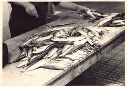 Griekenland Greece Rhodos Baie De Mandraki Haven Port  Fish Market Vismarkt Vis Poissons Photo Foto GEVAERT   Barry 4186 - Grecia