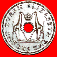 + GREAT BRITAIN (1955-1964): RHODESIA AND NYASALAND ★ 1/2 PENNY 1956 GIRAFFES UNCOMMON! LOW START ★ NO RESERVE! - Rhodesia