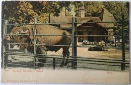 V 52003 - Basilea - Basel - Zoolog Garten - BS Bâle-Ville