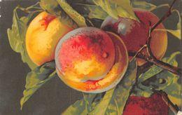 Pêche - Fruit - Pêches - Landwirtschaftl. Anbau
