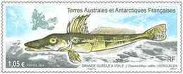 TAAF 2020 - Grande Gueule à Voile ** - Tierras Australes Y Antárticas Francesas (TAAF)