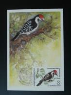 Carte Maximum Card Oiseau Pic Bird Woodpecker URSS 1979 - Specht- & Bartvögel