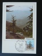 Carte Maximum Card Arbre Tree Montagne Mountain Italie 1985 - Maximum Cards