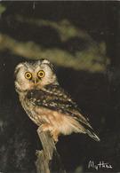 Carte Postale CP MYTHRA - ANIMAL - OISEAU - HIBOU CHOUETTE De Tengmalm - OWL Postcard - EULE Postkarte - 28 - Birds