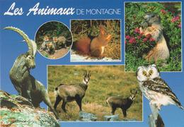Carte Postale CP MYTHRA - ANIMAL FOX SQUIRREL MARMOT CHAMOIS & OISEAU HIBOU CHOUETTE Tengmalm - OWL Postcard - EULE - 30 - Birds