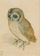 Carte Postale CP Estampe ALBRECHT DÜRER - ANIMAL - OISEAU - HIBOU CHOUETTE HULOTTE - TAWNY OWL BIRD Postcard - EULE - 35 - Birds