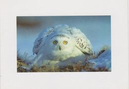 Carte Postale CP Double - ANIMAL - OISEAU - HIBOU HARFANG DES NEIGES - SNOWY OWL BIRD Postcard - EULE - 38 - Vögel