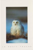 Carte Postale CP La Haute Touche - ANIMAL - OISEAU - HIBOU HARFANG DES NEIGES - SNOWY OWL BIRD Postcard - EULE - 39 - Birds