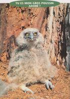 Carte Postale CP Humoristique - ANIMAL - OISEAU - HIBOU - Comic OWL BIRD Postcard - EULE - 47 - Birds