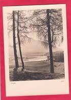 Modern Post Card Of Seefeld In Tirol,Austria,D51. - Seefeld