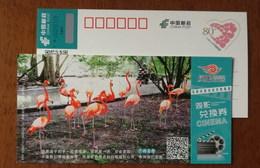 James Flamingo Bird In Guangzhou Changlong Zoo,CN 17 Hubei Post Phoenix Cinema Ticket Exchange Certificate Advert PSC - Flamingo