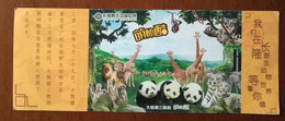 Giraffe,lion,giant Panda,Koala,white Tiger,mongooses,China 2016 Chimelong Safari Park Advertising Pre-stamped Card - Giraffen