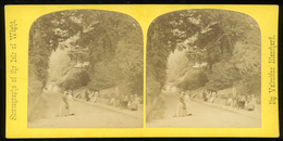 Stereoview - View Near Pond, Bonchurch, ISLE OF WIGHT - Visionneuses Stéréoscopiques