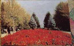 Russia. Chechen Republic - Chechnya. Groznyi Capital - Old Postcard 1968 - Tchétchénie