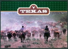 USA  - TEXAS ROUNDUP  - COWBOYS  -  CATTLE  -  HORSE  - UNUSED - Abilene