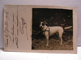 CPA CARTE PHOTO G.PARENT RUE HUMBLOT XV EME PARIS CHIEN FOX TERRIER 714 - Distretto: 15