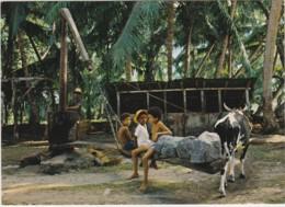 CPM Seychelles - Processing Coconut Oil At La Digue (fabrication De L'huile De Coco) - Seychelles